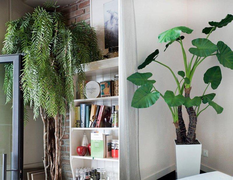 piante in casa senza pollice verde - a casa di ro