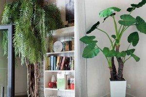 piante in casa senza pollice verde