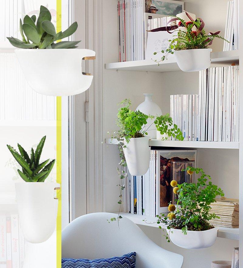 vaso succulente
