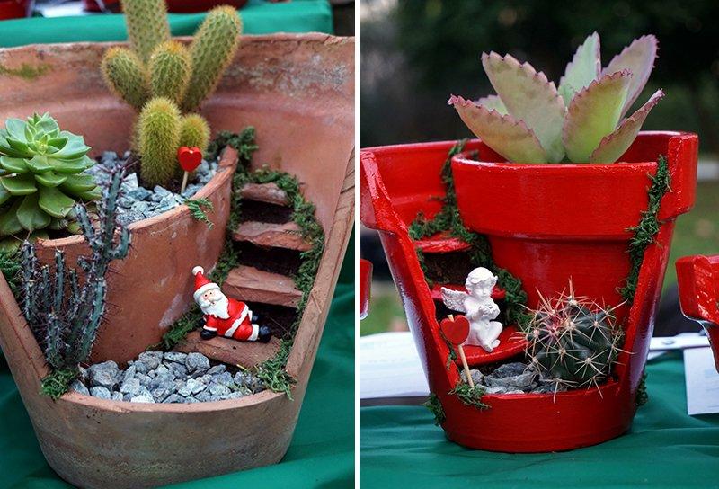 piante grasse Natale